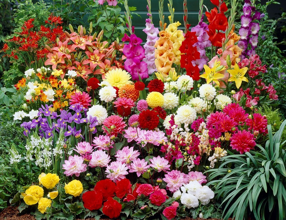 Fiesta bulb marketing already our gardens are calling for attention to start planning to plant it up with summer flowering bulbs all the dahlias gladioli begonias mightylinksfo