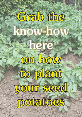 How to plant your seed potatoes