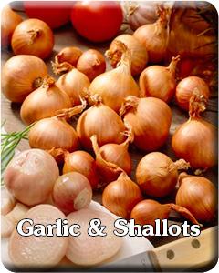 Garlic & Shallots