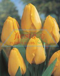 Golden Apeldoorn