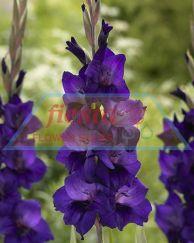 Purple_Flora_1.jpg