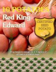 Red King Edward
